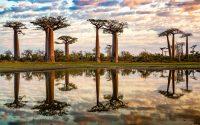 baobab-tree-kleur-liggend