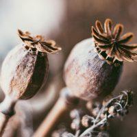 dried-flowers-kleur-vierkant