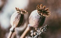 dried-flowers-liggend