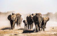 elephants-kleur-liggend