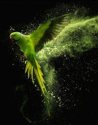 green-parrot-kleur-staand