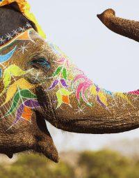 painted-elephant-kleur-staand