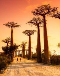 trees-sunset-kleur-staand
