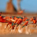 Birds schilderij