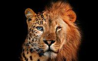 Jaguar lion verticaal