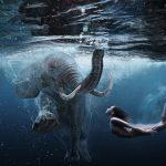 Elephant under water schilderij